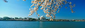 Panoramic View of Jefferson Memorial and Cherry Blossoms in Spring, Washington D.C.