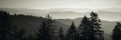 https://imgc.allpostersimages.com/img/posters/panoramic-view-of-trees-great-smoky-mountains-national-park-north-carolina-usa_u-L-P6JKPF0.jpg?p=0
