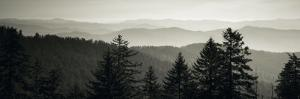 Panoramic View of Trees, Great Smoky Mountains National Park, North Carolina, USA
