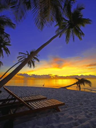 Deckchair on Tropical Beach by Palm Tree at Dusk and Blue Heron, Maldives, Indian Ocean