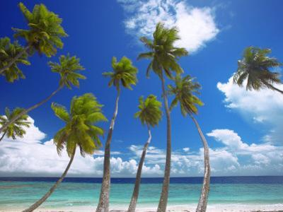 Empty Beach and Palm Trees, Maldives, Indian Ocean