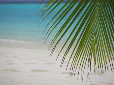 Palm Tree Leaf and Tropical Beach, Maldives, Indian Ocean