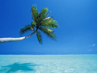Palm Tree Overhanging the Sea, Male Atoll, Maldives, Indian Ocean