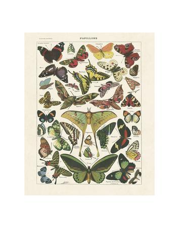 https://imgc.allpostersimages.com/img/posters/papillons-i_u-L-F8IKQ40.jpg?p=0