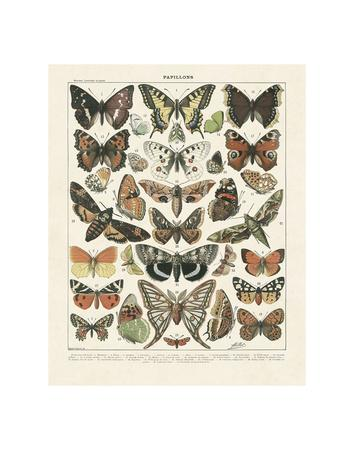 https://imgc.allpostersimages.com/img/posters/papillons-ii_u-L-F8IKUW0.jpg?p=0