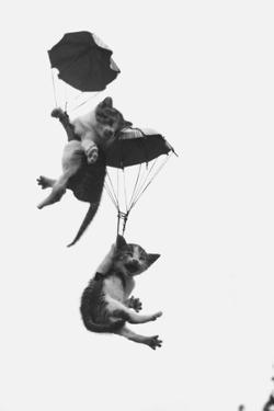 Parachuting Kittens