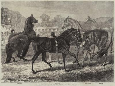 https://imgc.allpostersimages.com/img/posters/parade-of-thoroughbred-sires-after-the-yearling-sale-at-middle-park-eltham_u-L-PUSL930.jpg?artPerspective=n