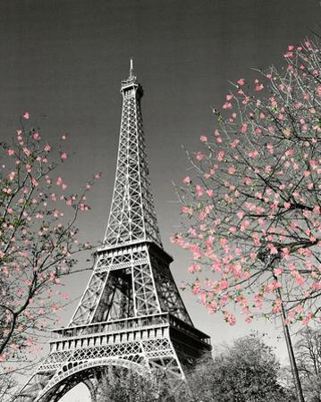 Paris Blossoms