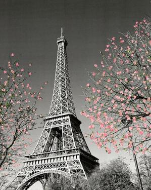 Paris Blossoms