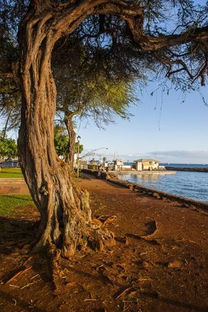 https://imgc.allpostersimages.com/img/posters/park-on-the-coast-of-lahaina-maui-hawaii-united-states-of-america-pacific_u-L-PQ8Q7N0.jpg?p=0