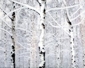 Birch Forest Winter by Parker Greenfield