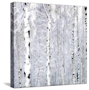 Birch Wonderland by Parker Greenfield