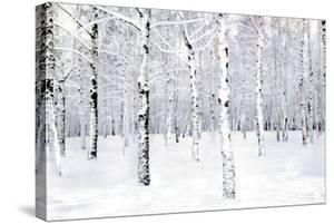 Walking in a Winter by Parker Greenfield