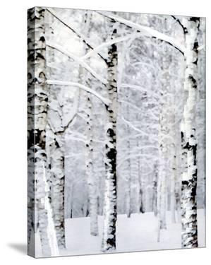 Winter Wonderland by Parker Greenfield
