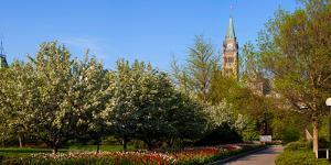 Parliament Building seen from a garden, Parliament Hill, Ottawa, Ontario, Canada