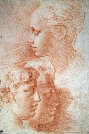 Study of the Heads, C1527 by Parmigianino
