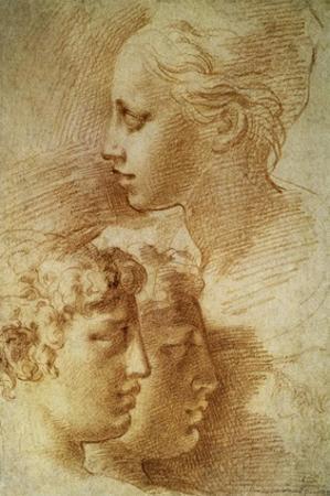 Three Profiles by Parmigianino