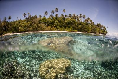 https://imgc.allpostersimages.com/img/posters/partially-submerged-view-of-shoreline-with-palm-trees-solomon-islands-pacific_u-L-PQ8Q3N0.jpg?p=0