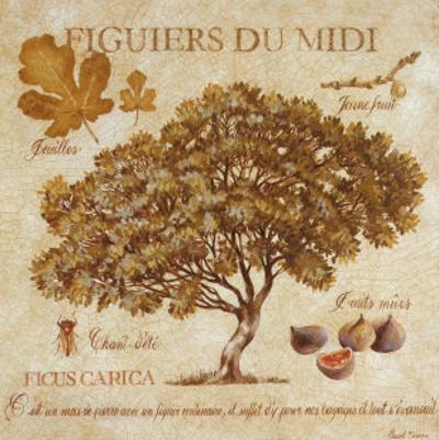 Figuiers du Midi