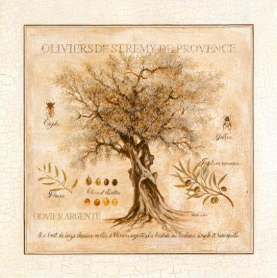 Oliviers de Saint Remy de Provence