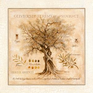 Oliviers de Saint Remy de Provence by Pascal Cessou