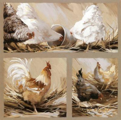Poules Blanches et Coq