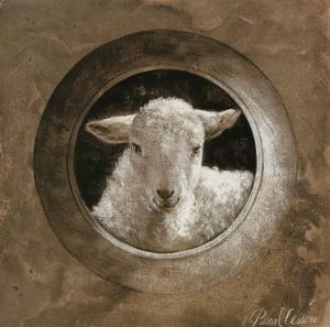 The Sheep by Pascal Cessou