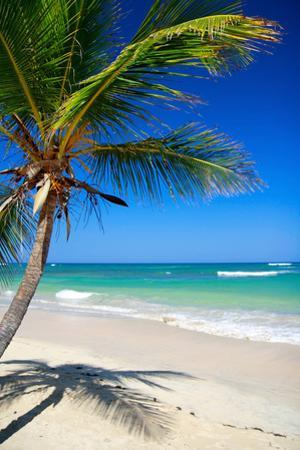 Caribbean Beach with Beautiful Palms and White Sand by pashapixel