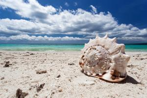 Seashell on Tropical Beach by pashapixel