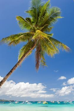 Tropical Beach with Beautiful Palm and White Sand by pashapixel