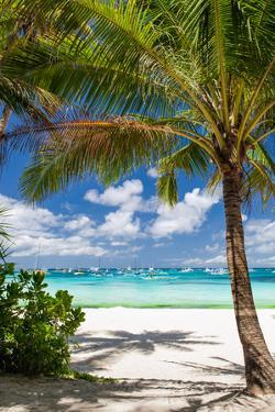 Tropical Beach with Beautiful Palm by pashapixel