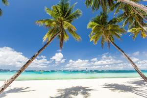 Tropical Beach with Beautiful Palms and White Sand by pashapixel