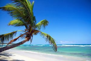 Tropical Beach with Beautiful Palms by pashapixel