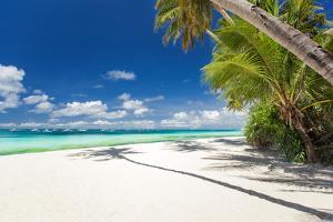 Tropical Beach with Palm and White Sand by pashapixel
