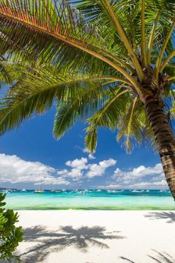 Tropical Beach with White Sand by pashapixel