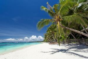 Tropical Coastline with Beautiful Palm and White Sand by pashapixel