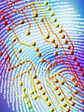 Biometric Fingerprint Scan by PASIEKA