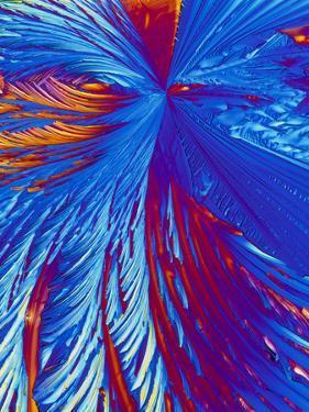 Cholesterol Crystals by PASIEKA