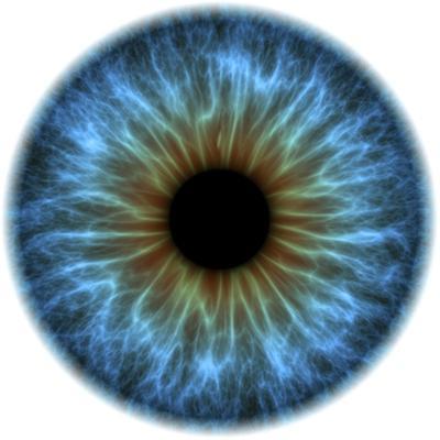 Eye, Iris