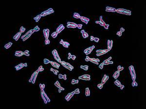 Human Chromosomes by PASIEKA