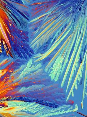 Oxytocin Crystals, Light Micrograph by PASIEKA
