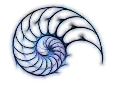 Sectioned Shell of a Nautilus, Artwork