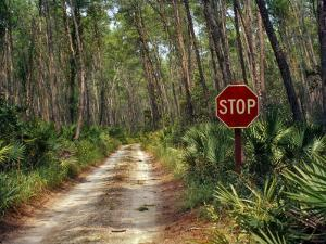 Central Florida, Stop Sign, Ocala Forest Road by Pat Canova