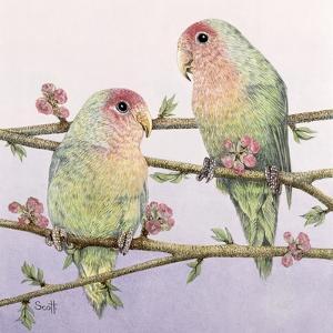 Love Birds by Pat Scott