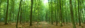 Pathway Through Forest, Mastatten, Germany