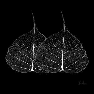 Minimalism in Black II by Patricia Pinto
