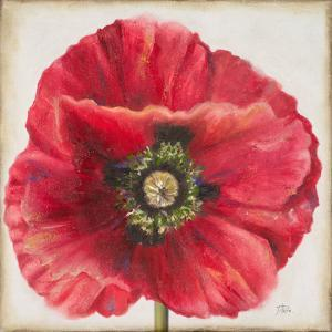 Red Poppy by Patricia Pinto