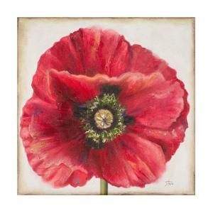 Red Poppy by Patricia Pinto