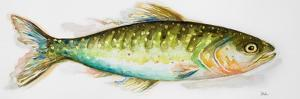 Watercolor Fish II by Patricia Pinto