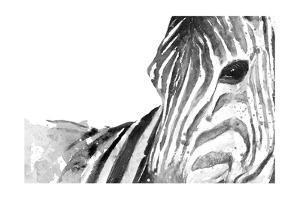 Zebra Gaze by Patricia Pinto